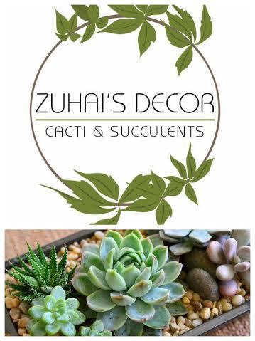 zuhai's live cacti & succulents decor