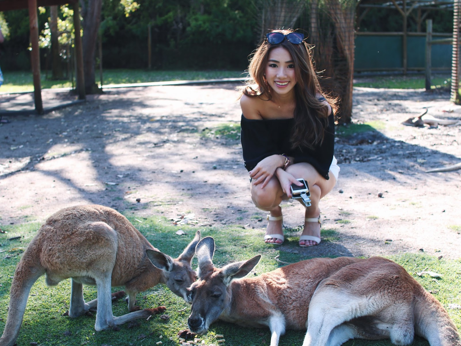 wildlife, caversham, perth, park, kangaroo