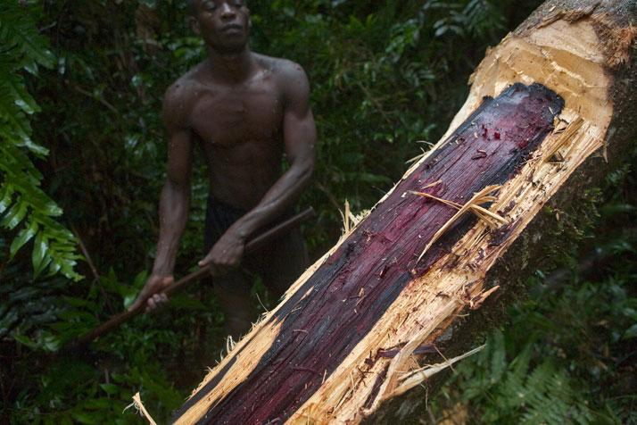 BARA Ihorombe Madagascar Madagascar pays pauvre ~ Bois De Madagascar