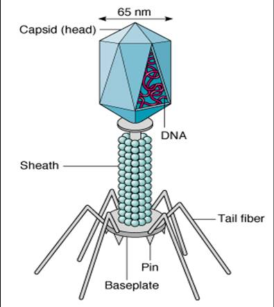 a comprehensive analysis of the viruses complex molecules or simple life forms As subcellular life forms are many of the coat protein sequences of apparently unrelated viruses that infect all 3 domains of life analysis of chimaeras.