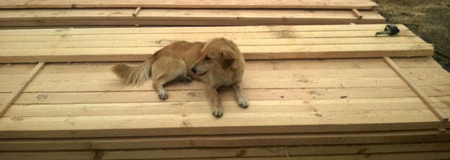 The dog is the same colour as the wood!