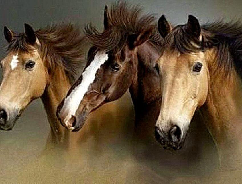 Beautiful Wild Horses Wallpaper Download Beautiful Wild Horses