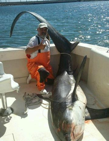 USA  massive Thresher Shark Caught in MontaukGlyphis Shark Bite