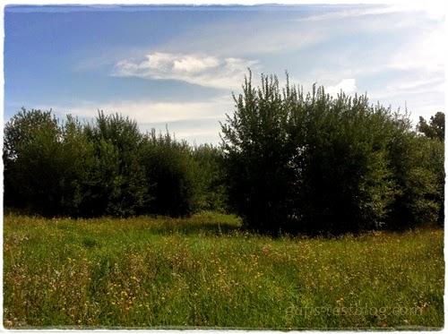 Schöne Wiesenlandschaft