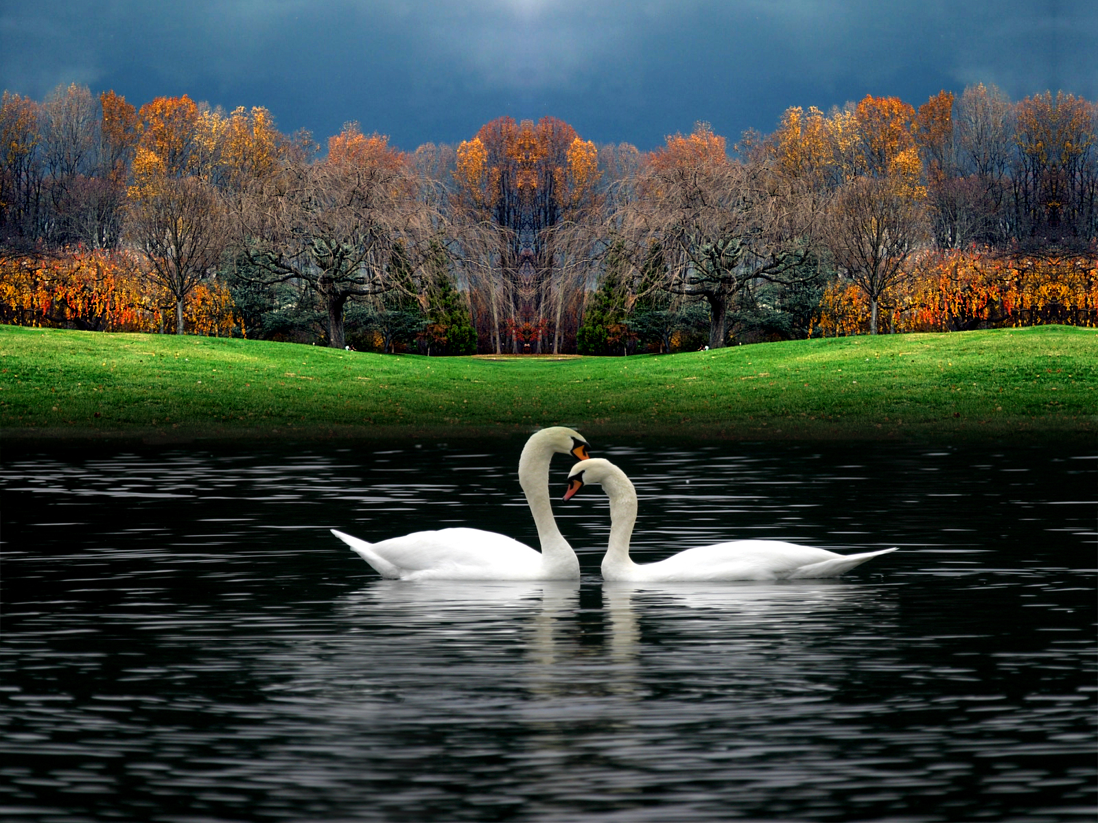 PicturesPool: Love Birds Wallpapers | Beautiful Birds Pictures