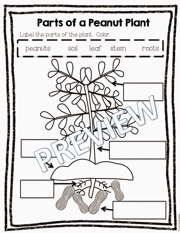 Polka Dot Firsties George Washington Carver – George Washington Carver Worksheets