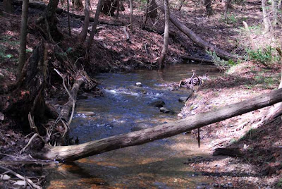 a small portion of the stream or creek running through Scout Valley, Orillia