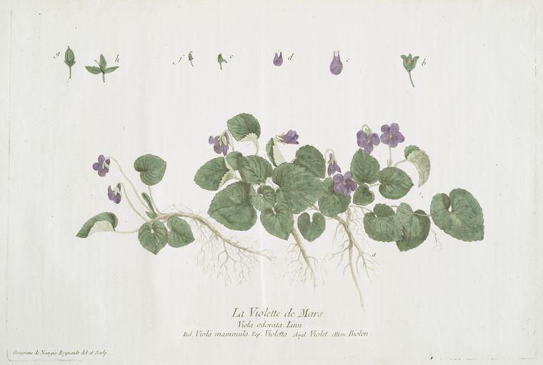maria does stuff harbingers of spring and violet syrup. Black Bedroom Furniture Sets. Home Design Ideas