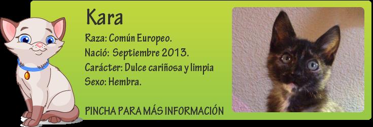 http://mirada-animal-toledo.blogspot.com.es/2014/01/kara-preciosa-carey-en-adopcion.html