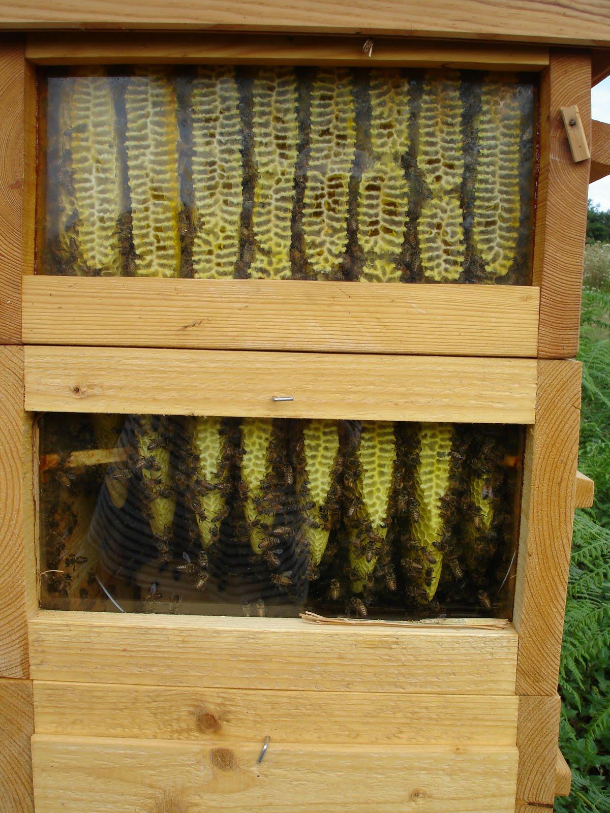 Les abeilles de l 39 eyre ruche warr - La ruche a miel ...