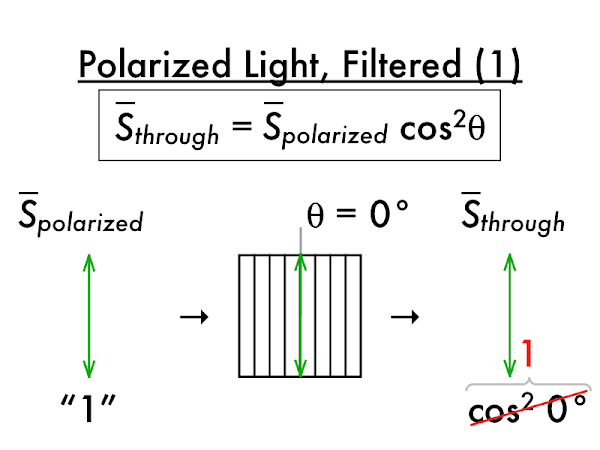 Again, this is an ideal polarizer, which lets all of the polarized light matching its transmission axis through.  Realistically a small amount of this light would be absorbed.