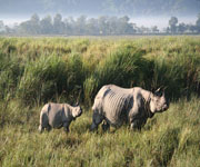 Kaziranga National Park India