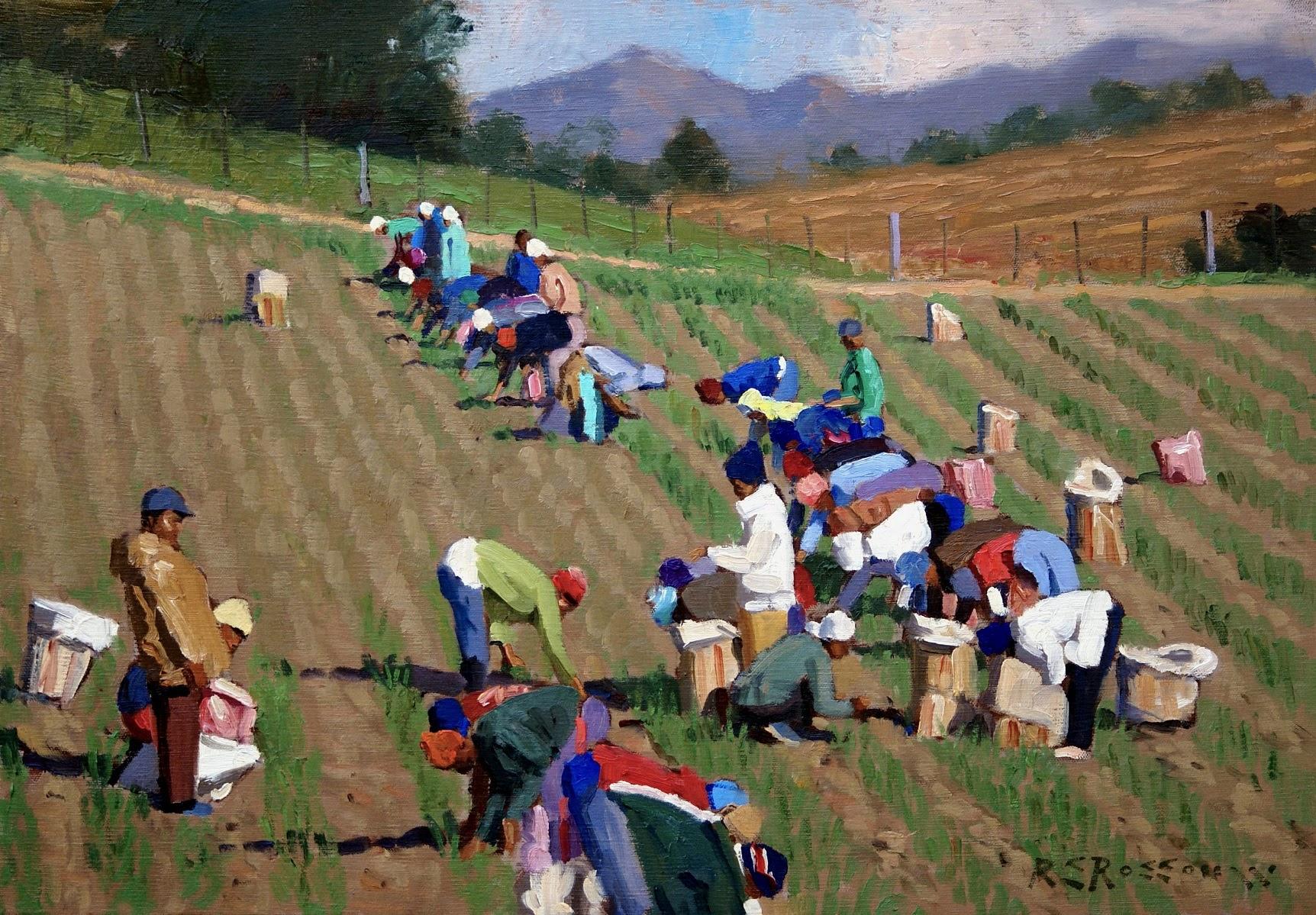 Roelof Rossouw The Onion Field