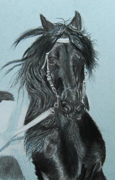 Mes oeuvres animalières - Page 2 Etape4zoom