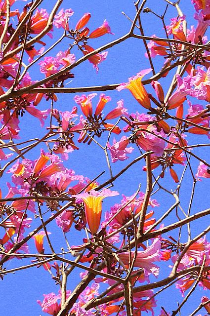 flower color pink and yellow on blue background - flores cor-de-rosa e amarelas em fundo azul