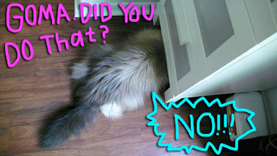 cat-throw-up03