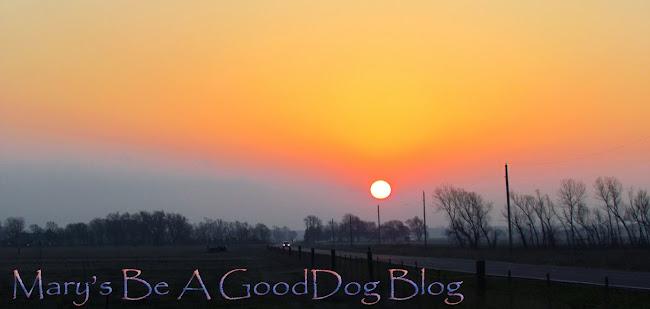 Mary's Be a GoodDog Blog