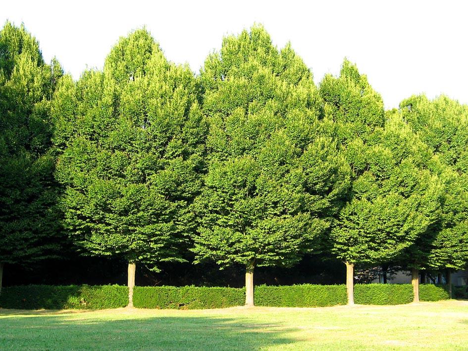 Arte y jardiner a los rboles en el jard n for Tipos de arbustos ornamentales