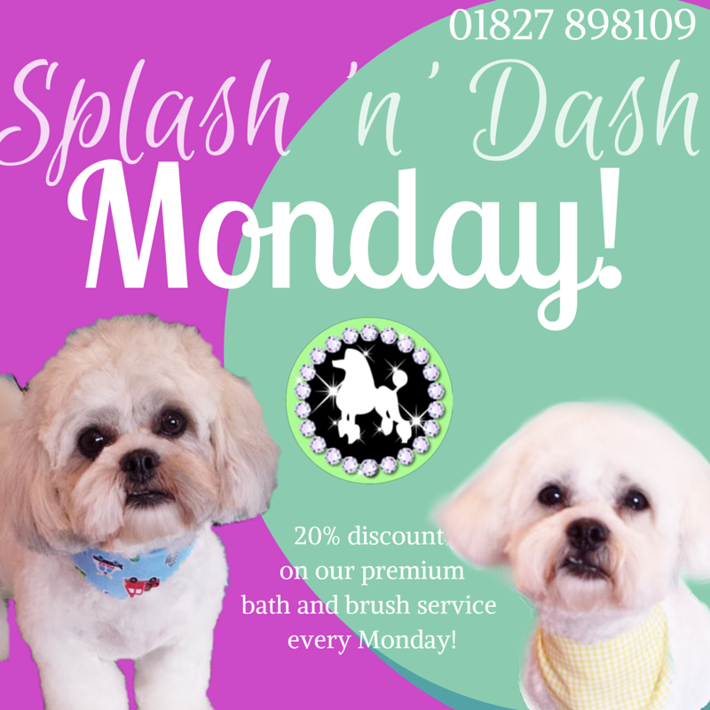 tamworth dog bathing and washing and grooming