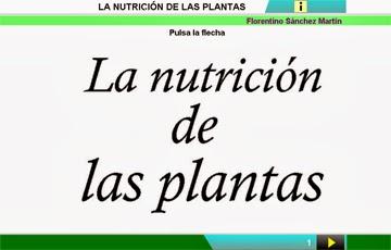 http://cplosangeles.juntaextremadura.net/web/edilim/curso_2/cmedio/plantas02/nutricion_plantas02/nutricion_plantas02.html
