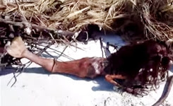 Dead Mermaid Found On Beach After Hurricane This Is The Original Clear Video