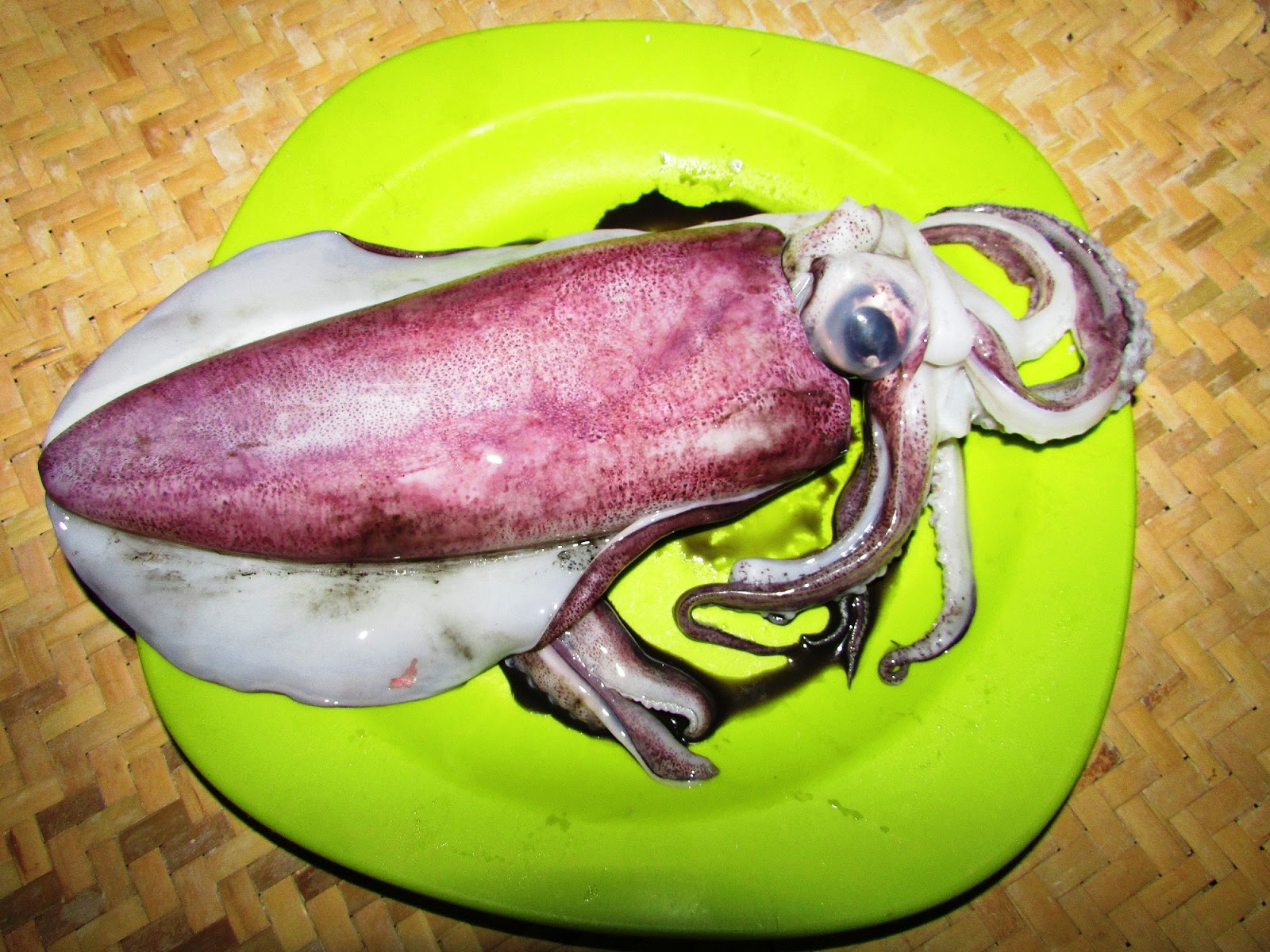 Cumi-cumi (Moluska Cephalopoda)