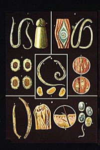 El método público de la profiláctica de las lombrices