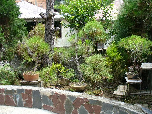 Eco posada los bonsais de samarkanda m rida venezuela - Tierra para bonsais ...