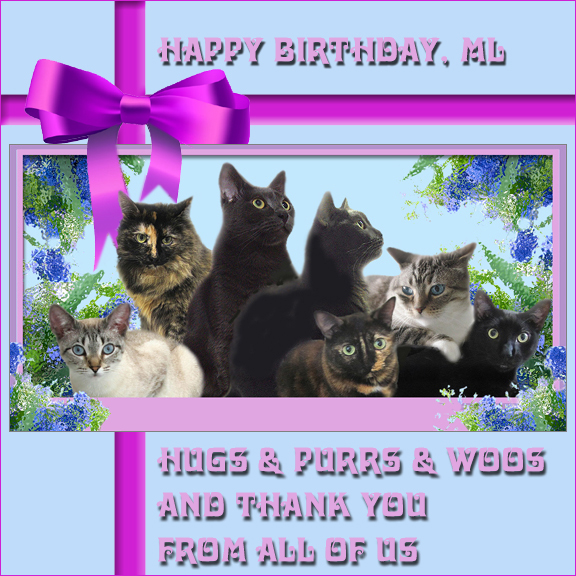 Happy Birthday Cat Wishes: Cat's Cats: Happy Birthday ML
