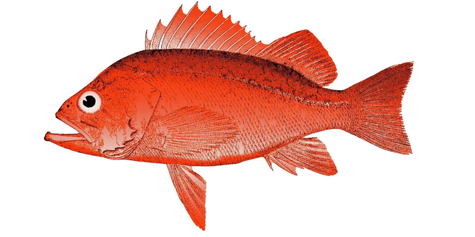 Red Fish Visitors to redfish rocks