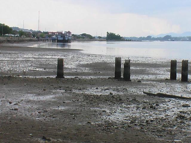 Teluk Kendari Kian Dangkal