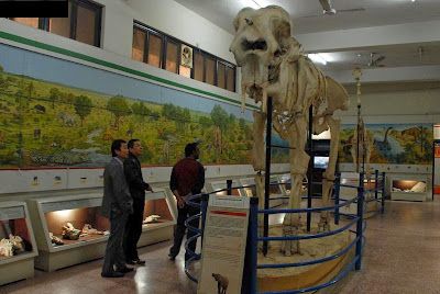Visitors taking interest in the model of an animal at Pakistan Museum of Natural History