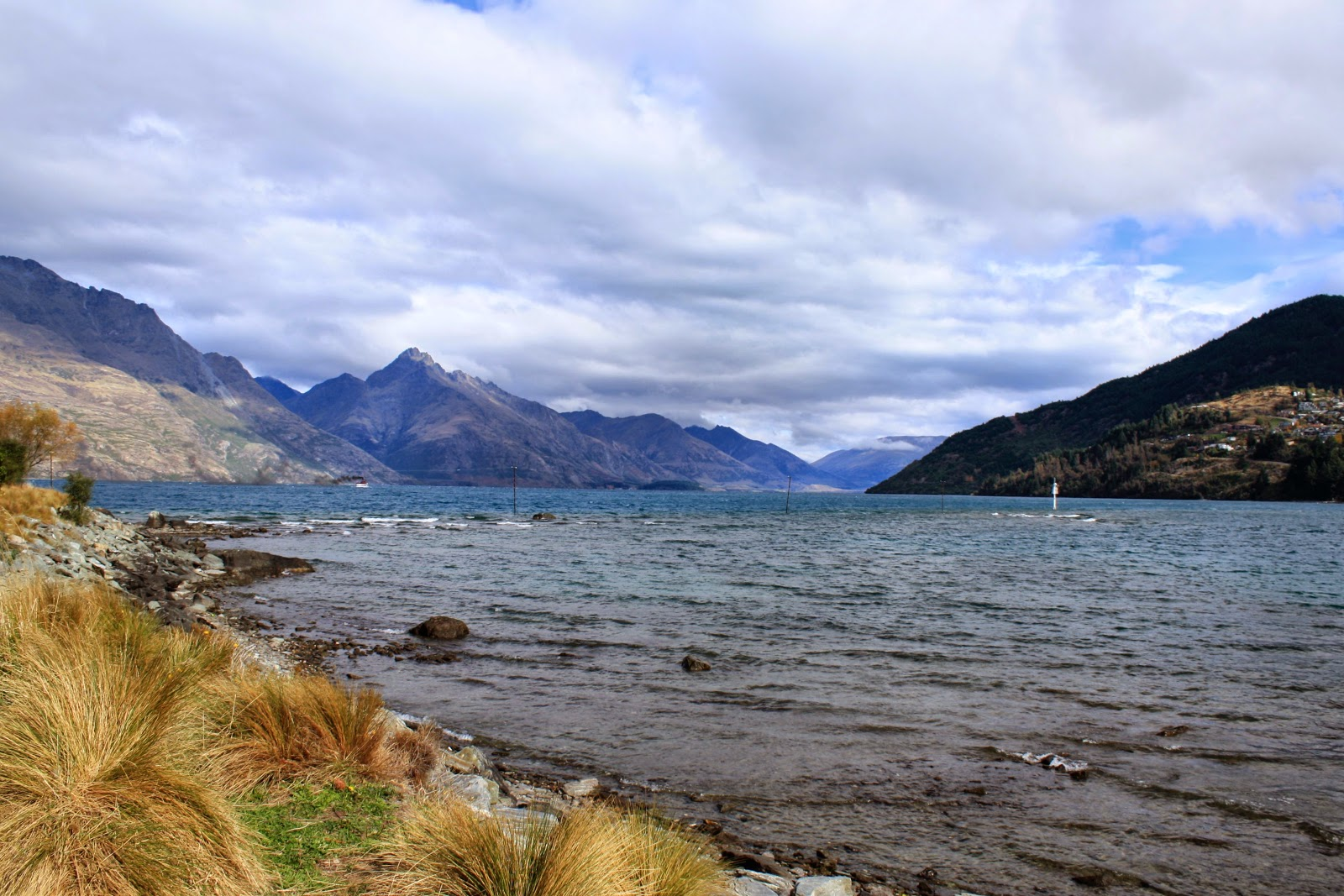 Tussock grass at Lake Wakatipu, Queenstown.