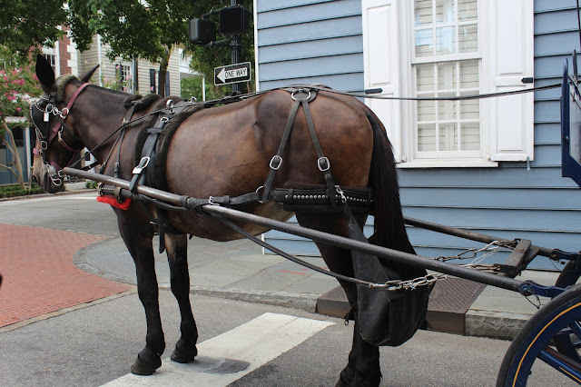 Charleston City Carriage Tour