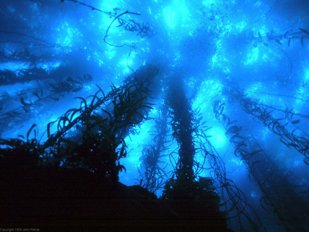 Deep Sea Ocean