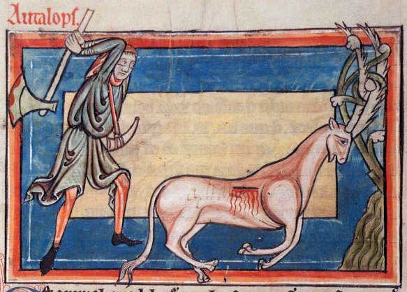 Harley St Jerome >> The Art of Ugly Animals: Medieval Monstrosities