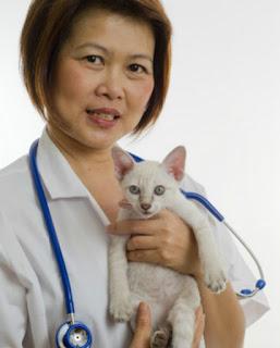 Kitten and Vet