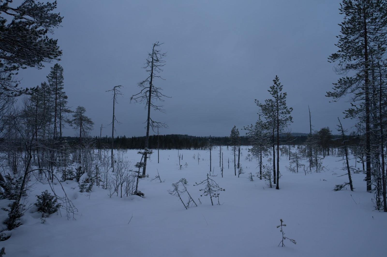 Syötteen kansallispuisto 6.12.2013