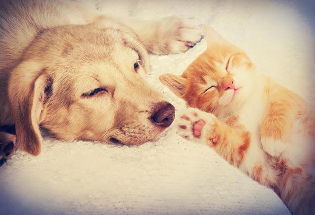 Research on increasing animal adoptions & reducing surrenders