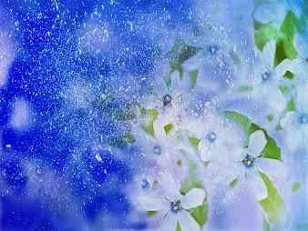 #2 Flowers Wallpaper