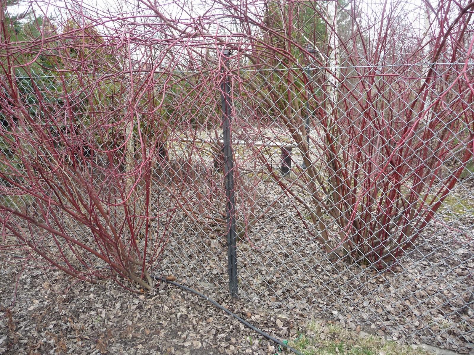 ozdobne żywopłoty z krzewów liściastych
