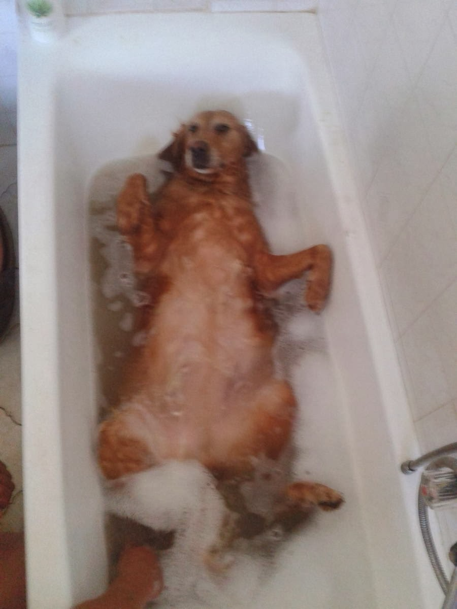 Cute dogs - part 8 (50 pics), dog takes a bath in bathtub