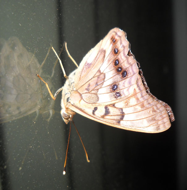 how to get rid of moths without mothballs