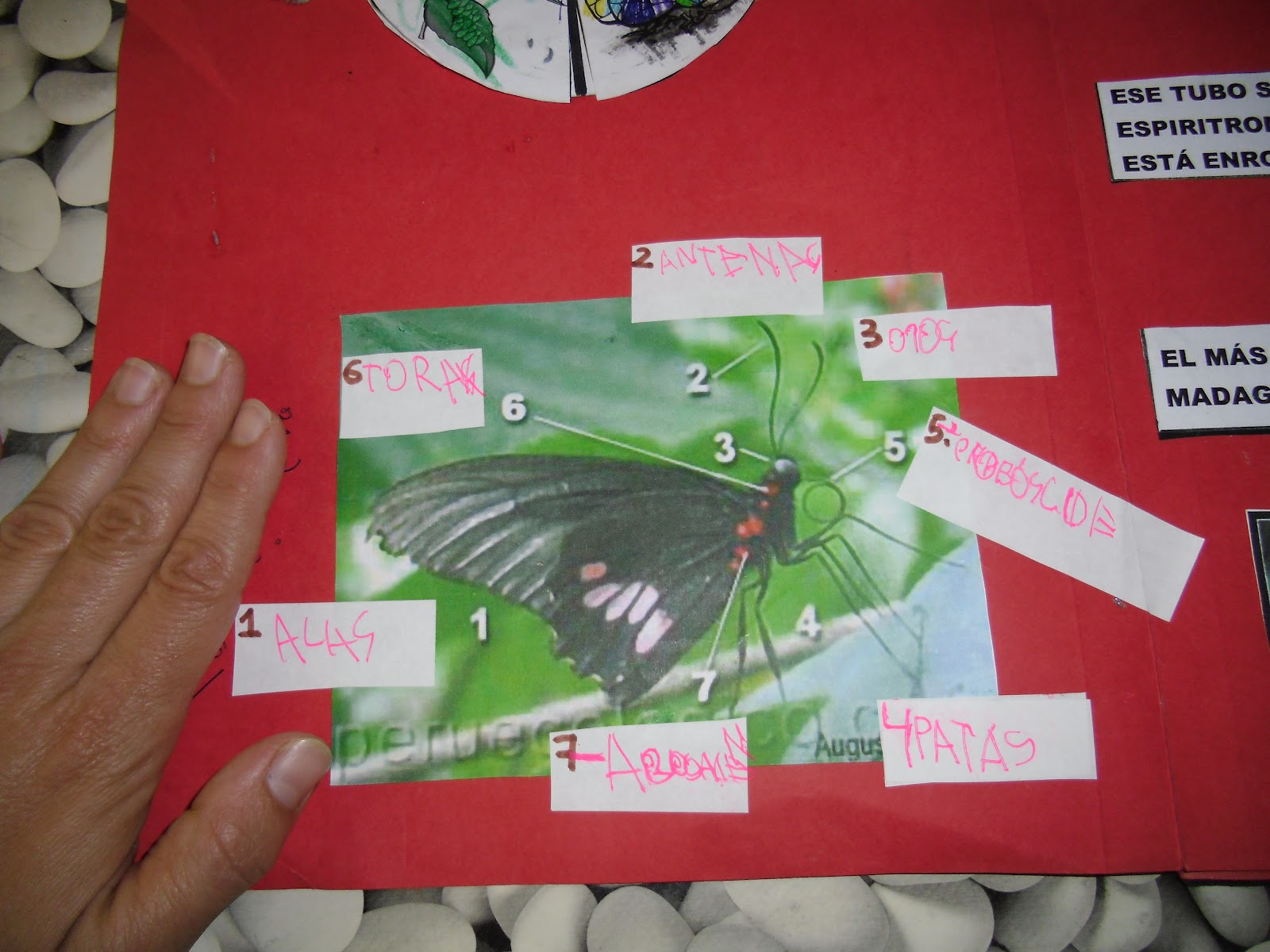 Trasteando en casa: Lapbook de Mariposa