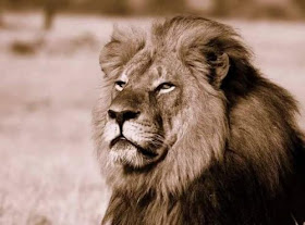 Cecil...que bell eres