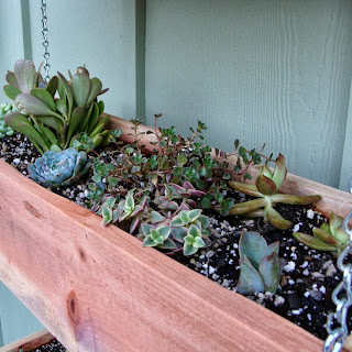 tiered succulent planter