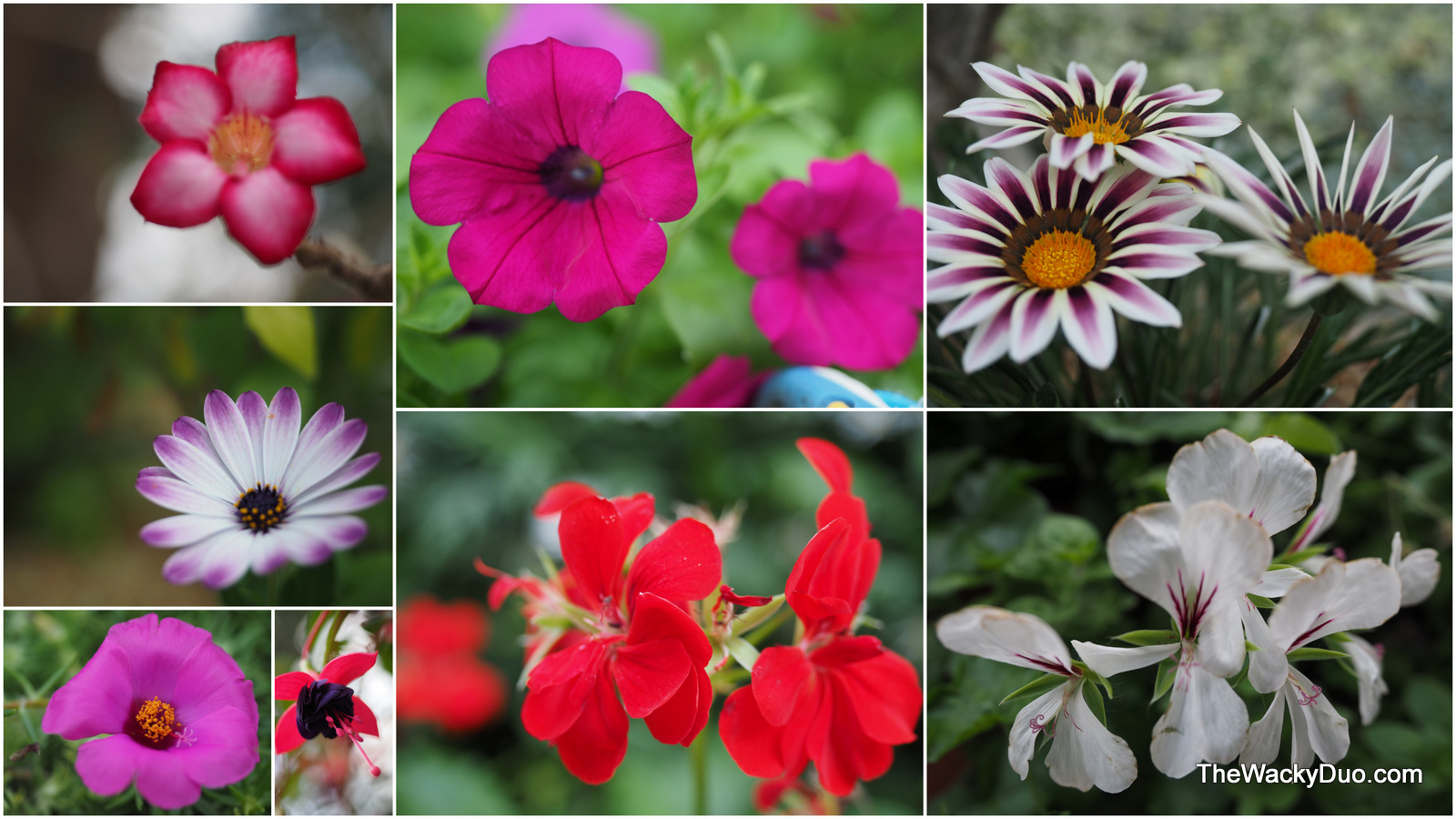 Another Thing To Look Out For Are The Blooming Flowers Around The Garden.  Take A Closer Look While You Are There. There Are Plenty Of Beautiful  Blooms At ...