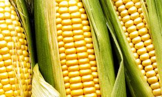 El Maiz en la alimentacion humana