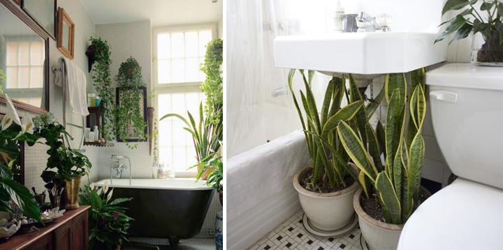 15 artistic plants for the bathroom tierra este 60594 - Houseplants for the bathroom ...