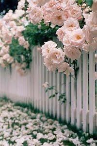 ♥ aqui tudo é decorado de vida...